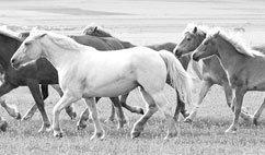 Hevoset -messut